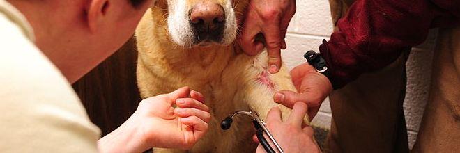 Új jogi szabályozás a felelős állattartásért