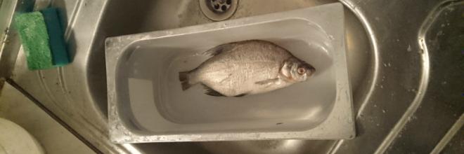 Több mint 200 kiló halat foglalt le az ÁHSZ