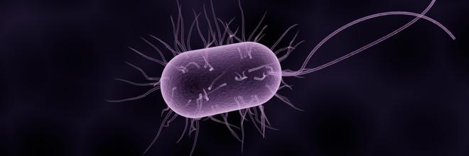 baktériumok esbl