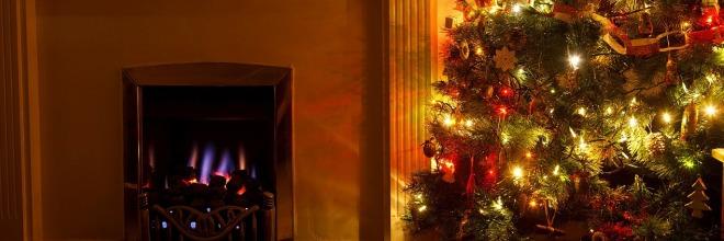 Gyökeres fát karácsonyra – biztos, hogy jót teszünk?