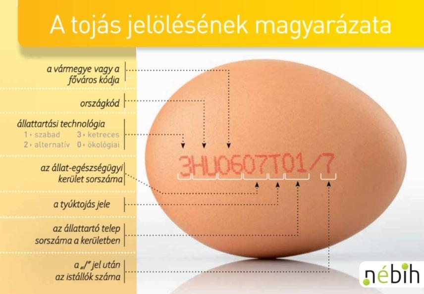 kezelés a gyermekkorból származó tojások listájával)